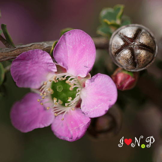 Pink Blossom Resendiz Brothers