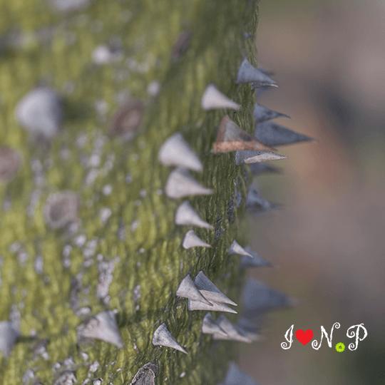 Proteas Flower Resendiz Brothers