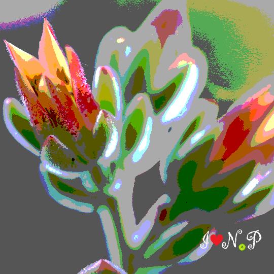 Orange Flowering Succulent Poster