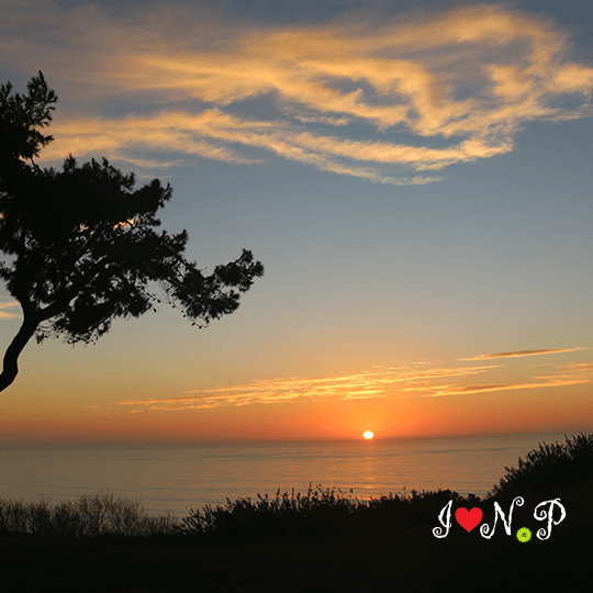 Torrey Pines Sunset